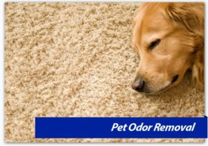 Pet Odor Removal, DC MD, Northern VA